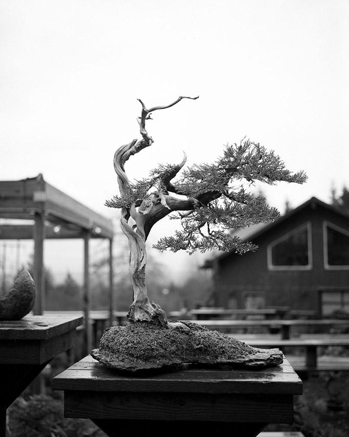 Mas_Imazumi_Rock_Planting