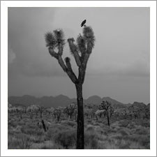 """stick gardens"" by Madeline Cass"