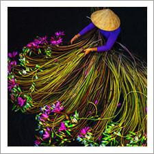 Vivid Photographs by Trung Huy Pham